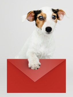 Aanbiddelijk jack russell retriever-puppy met een rood envelopmodel
