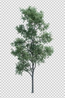 Aardobjecten boom op wit wordt geïsoleerd dat