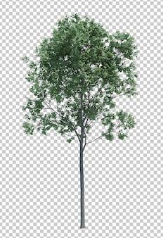 Aardobjecten geïsoleerde boom Premium Psd