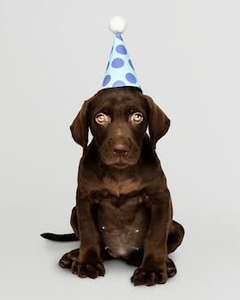 Adorable cachorro labrador retriever con un sombrero de fiesta