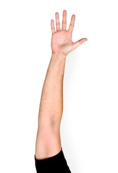 Aislamiento del gesto de mano en el fondo blanco