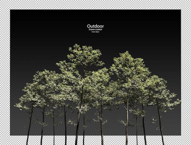 Alnus cremastogyne boom boom geïsoleerde 3d boom