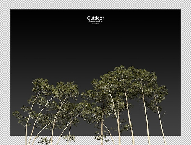 Alnus cremastogyne boom geïsoleerde boom uitknippad