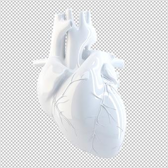 Anatomische illustratie van het menselijk hart