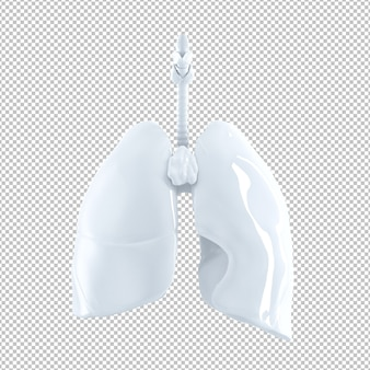 Anatomische illustratie van menselijke longen