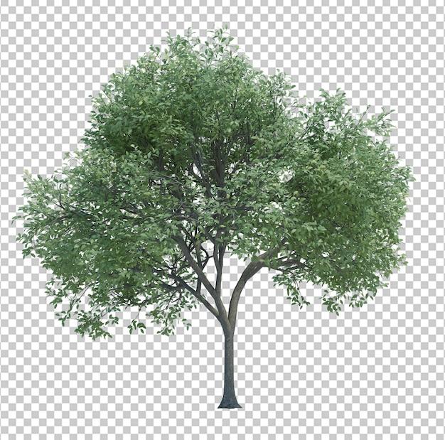 Árbol de objeto de naturaleza aislado