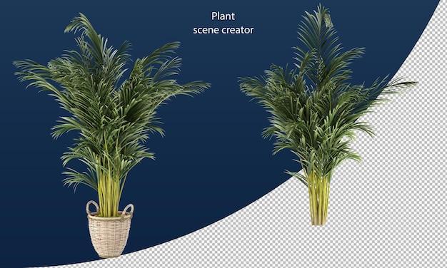 Areca palm in pot areca palm geïsoleerd teruggeven