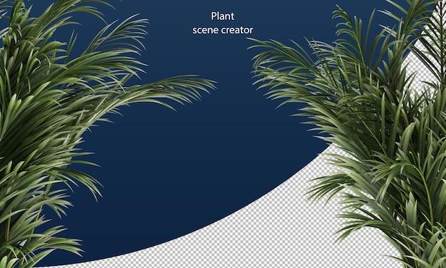 Areca palmbladeren rendering geïsoleerd