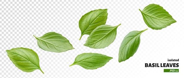 Basilicum bladeren geïsoleerd