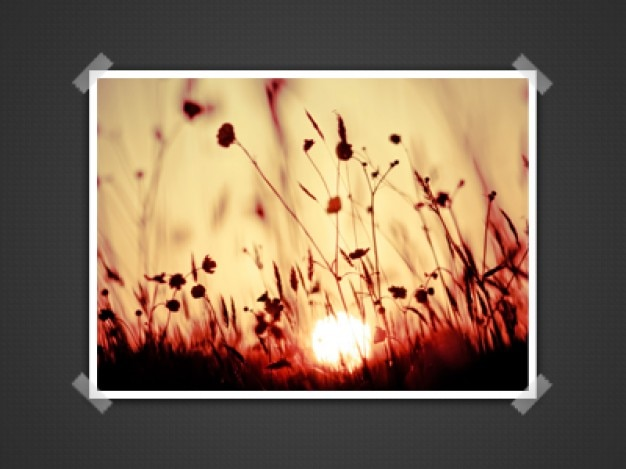Beatiful floreali presentazione immagini psd