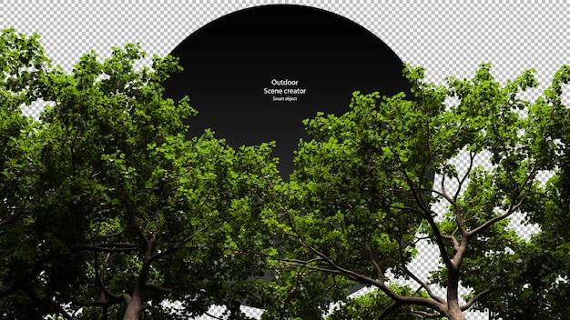 Boomtop weergave boomtop geïsoleerd