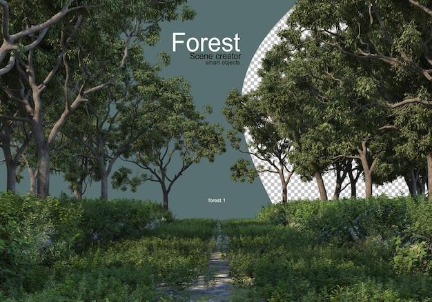 Bosque con varios tipos de árboles.