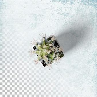 Bovenaanzicht cactus plant kantoor op witte pot geïsoleerd
