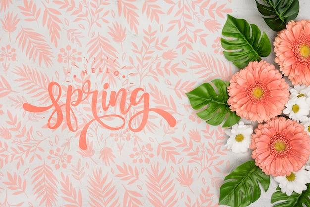 Bovenaanzicht van lente madeliefjes met andere bloemen