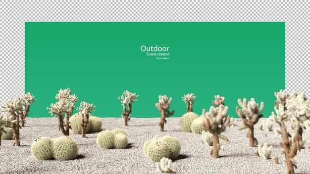 Buiten variëteit aan cactus op grind