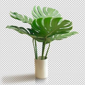 Bush green monstera blad geïsoleerd