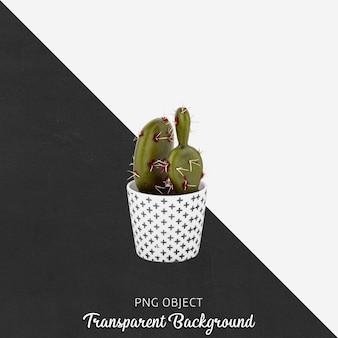 Cactus en maceta en transparente