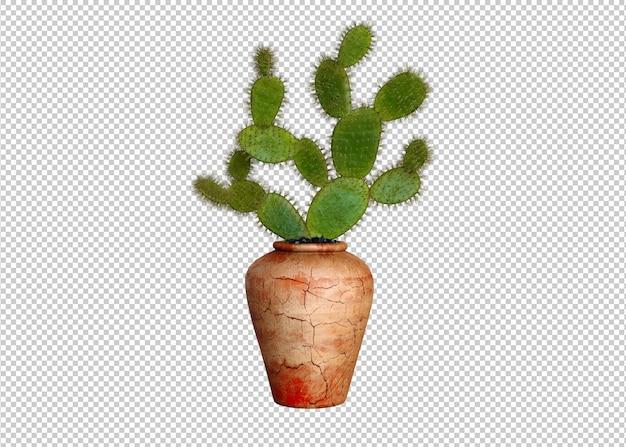 Cactus plant geïsoleerd op witte achtergrond