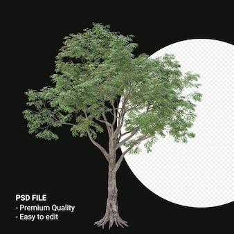 Celtis laevigata of sugarberry tree 3d render geïsoleerd op transparante achtergrond