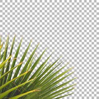 Cerrar vista de fondo de planta verde fresca