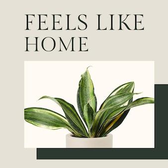 Cita inspiradora plantilla botánica psd con publicación de redes sociales de la planta sansevieria en estilo minimalista