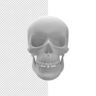 Close-up op schedel 3d geïsoleerd premium psd