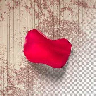 Close-up weergave rode roos met bloemblaadjes geïsoleerd