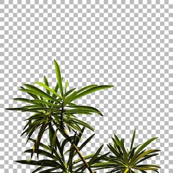 Close view verse groene plant achtergrond