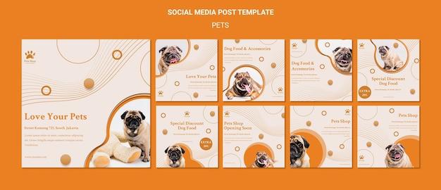 Colección de publicaciones de instagram para tienda de mascotas con perro