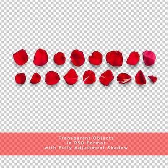 Collezione di petali di rosa su strato trasparente