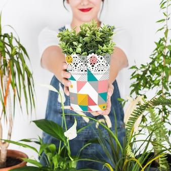 Conceito de jardinagem com mulher segurando a planta