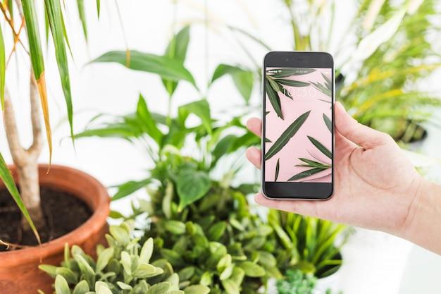 Concetto di giardinaggio con lo smartphone della holding della mano
