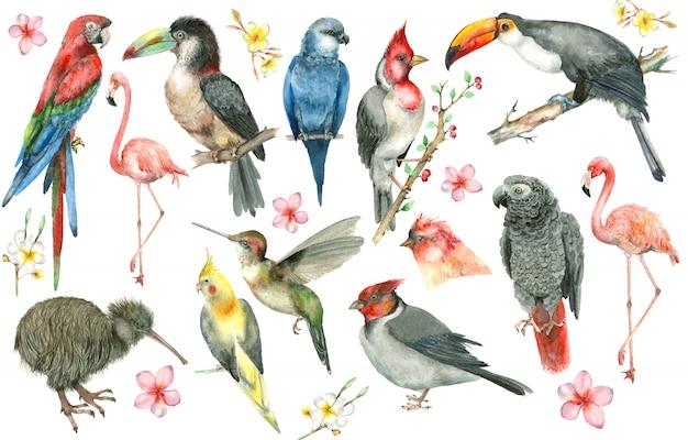 Conjunto de aves tropicales