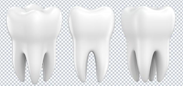 Conjunto de dientes premolares dentales