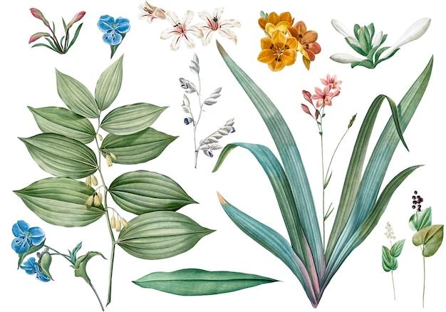 Conjunto de ilustraciones de flores y plantas.