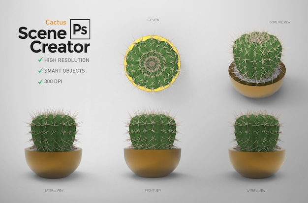 Creatore di scene. cactus. elementi separati.