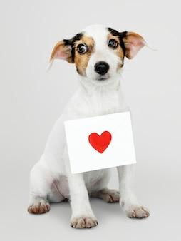 Cucciolo adorabile di jack russell retriever con un modello della lettera di amore