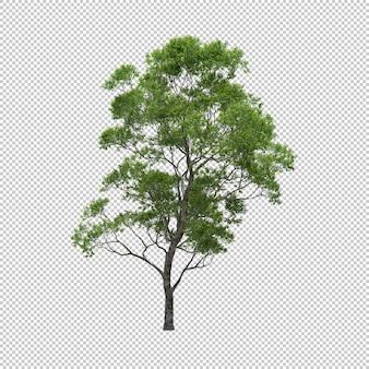 De eucalyptusboom met geïsoleerde achtergrond, 3d boom geeft terug