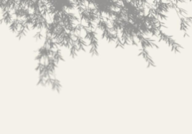 De schaduw van een boom op een witte muur.