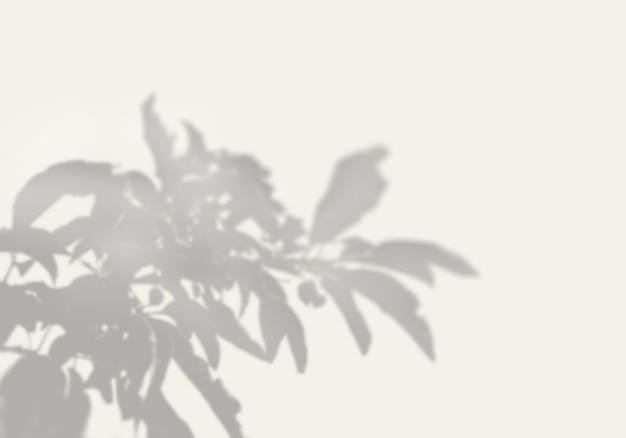 De schaduw van een exotische plant op een witte muur.