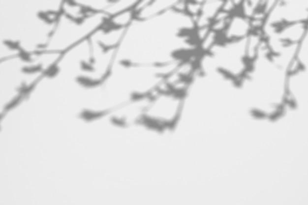 De zomerachtergrond van schaduwenboom op een witte muur
