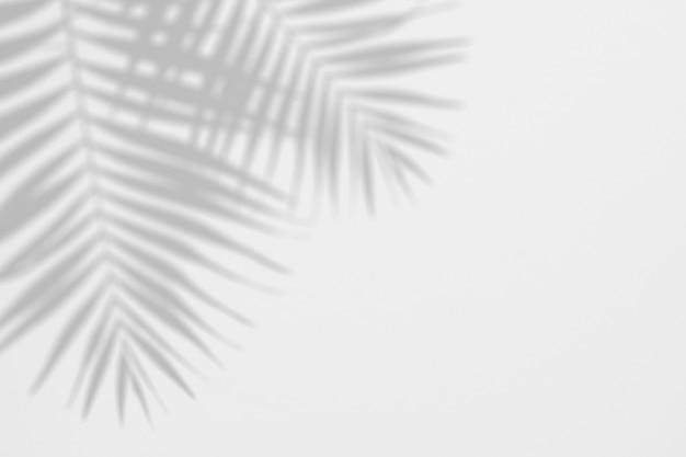 De zomerachtergrond van schaduwenpalmbladen op een witte muur