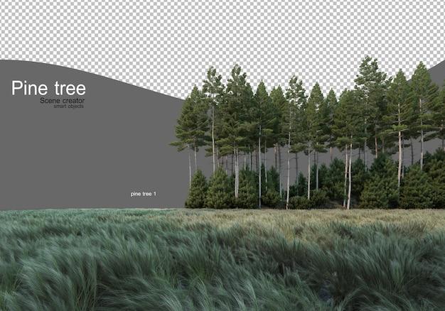 Dennenbos midden in het veld