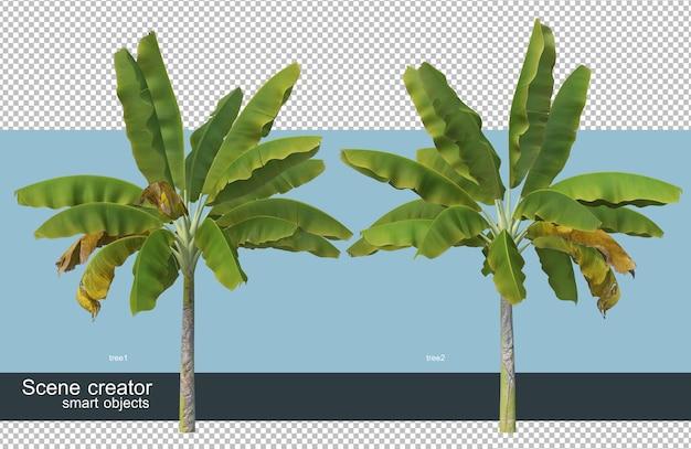 Diferentes tipos de representación 3d de plátano