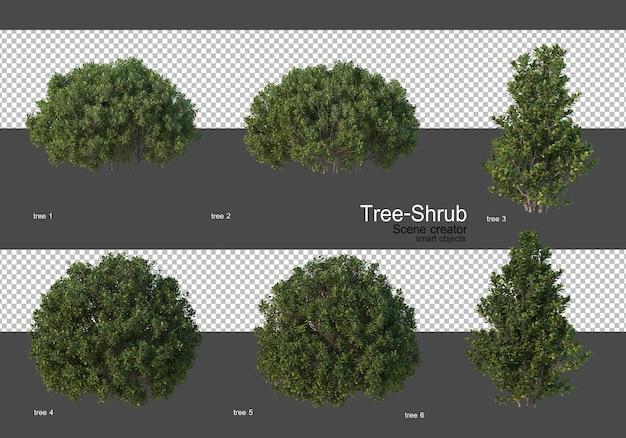 Diverse bomen en struiken