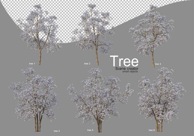 Diverse bomen in volle bloei met prachtige bloemen