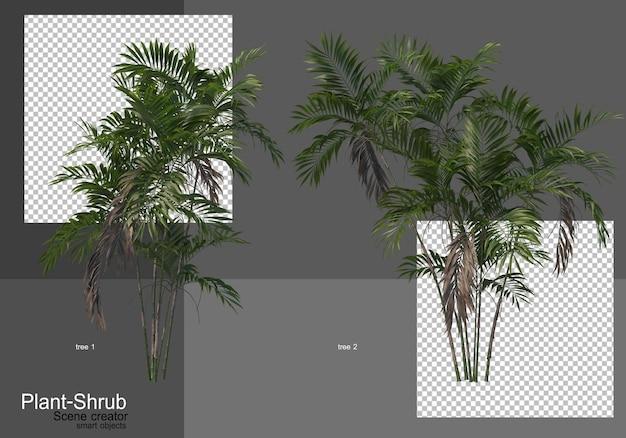 Diverse palmbomen en struiken