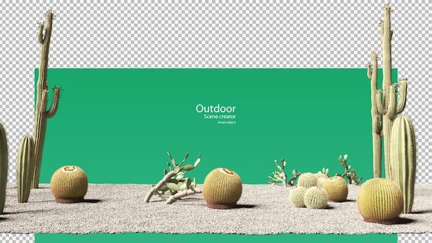 Diverse soorten cactussen op grind en zand Premium Psd