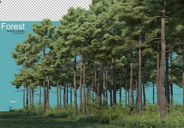 Diverse vormen van bos