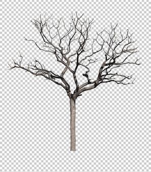 Donkere boom zonder bladeren geïsoleerd tegen witte achtergrond
